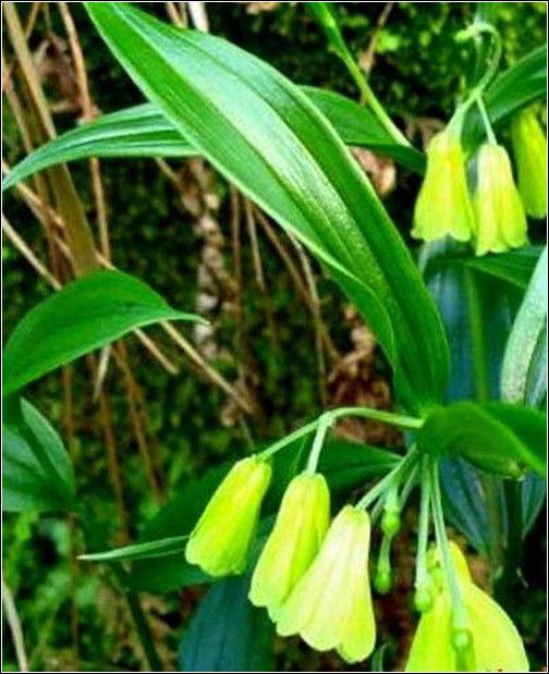 旺財旺家的28種植物,選一種吧!【植物風水】 - 無為居士 - 聚美齋