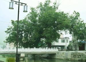 河南省林州市五个人_陵阳镇(河南省林州市辖镇) - 搜狗百科