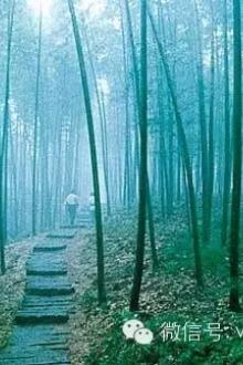 3月7-8日魅力古镇南浔-江南第一山莫干山竹海二日游