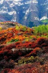 野蘑菇10月23号 周日走进红叶世界-坡峰岭