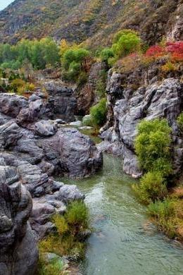 野蘑菇10.24号周六百里画廊最美秋景-乌龙峡谷