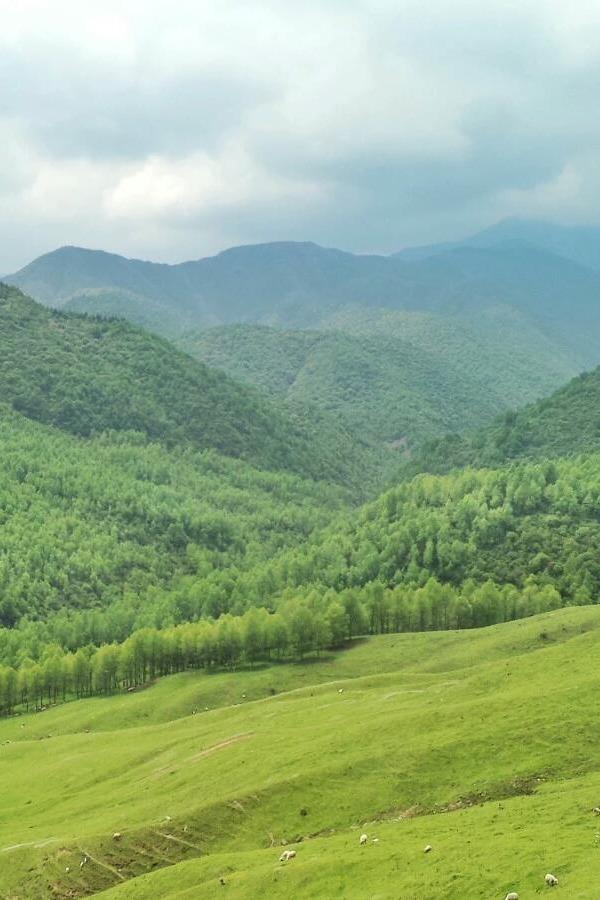青青竹子沟——我们去看初夏的草原和森林