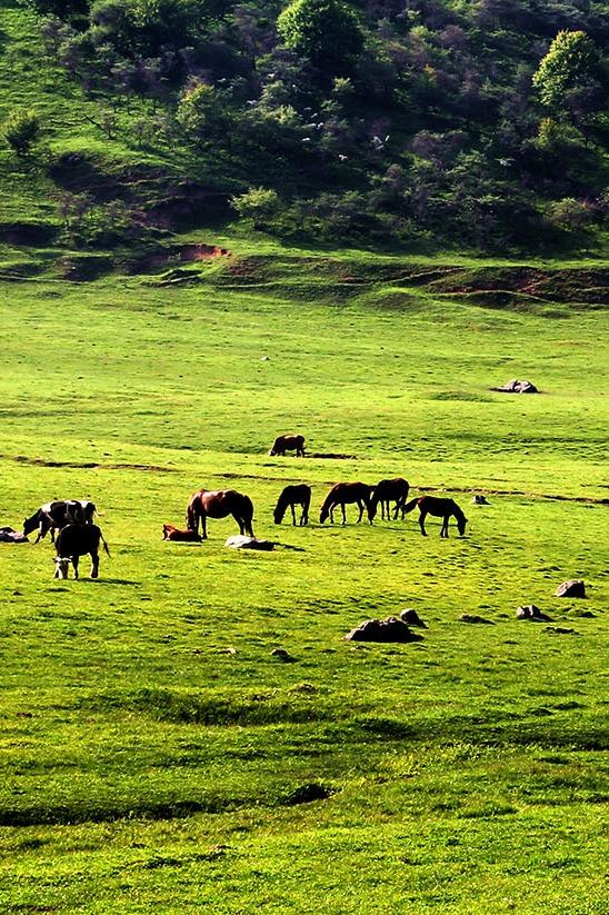 9月12日—13日(周六、日) 关山草原、龙门洞 休闲二日游