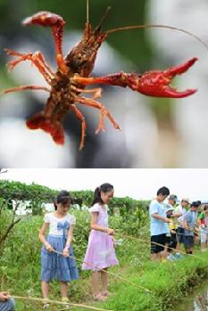 5月3日农家饭与钓龙虾亲子活动