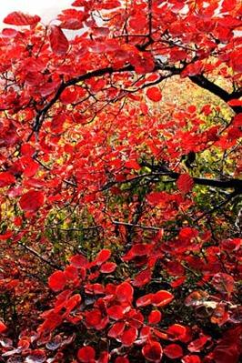 【山河约伴】10月18日卧龙台看红叶逗猕猴登高望远