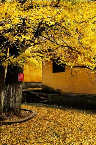 11月13号白岩寺摄影徒步看银杏