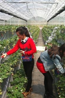 3月14日(周六)黄陂农庄摘草莓,品农家饭,钓鱼