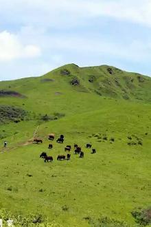 甘谷古坡草原行