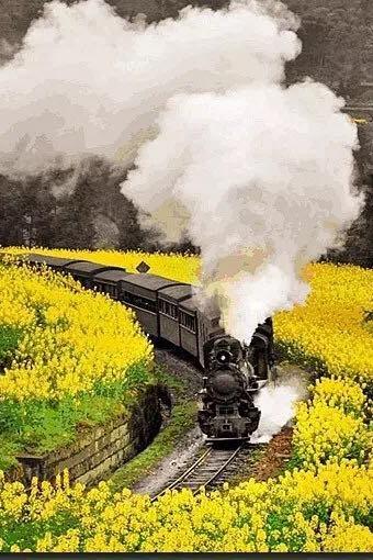 嘉阳赏油菜花、坐小火车穿越时光隧道