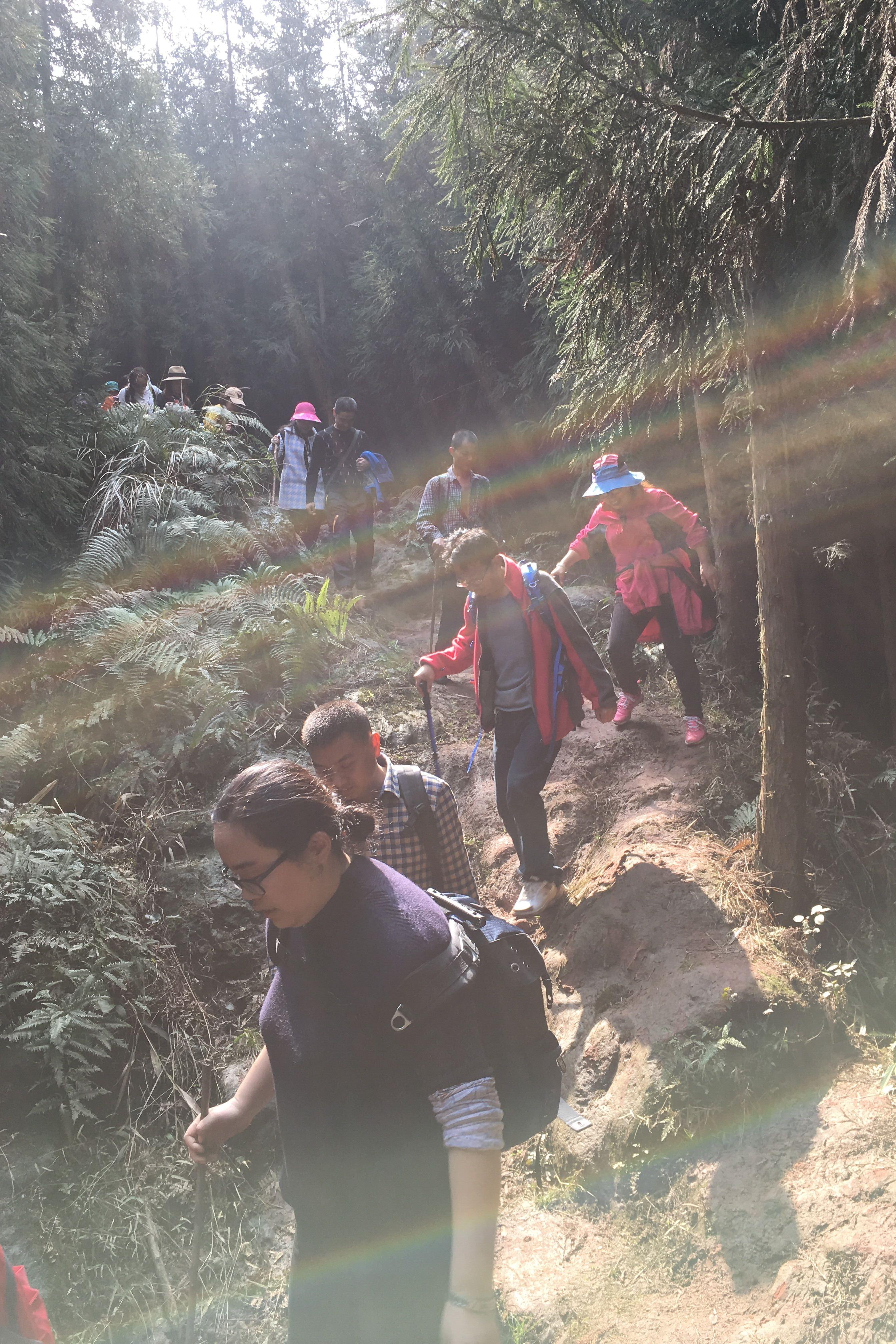 洪雅三宝C线森林徒步穿越