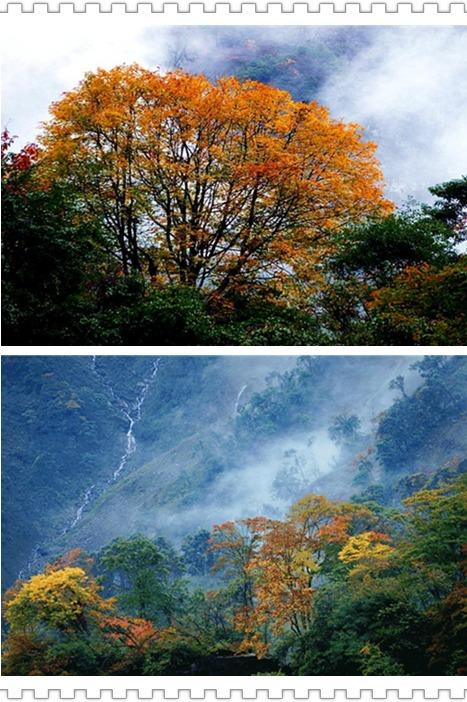 【三江一日游】10月30日徒步赏红叶品特色美食