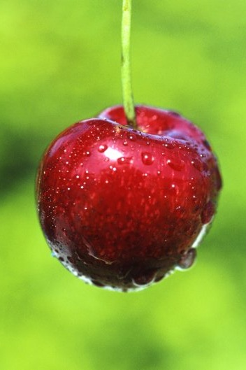 樱桃采摘休闲一日游