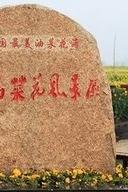 4月12日兴化千岛菜花、李中水上森林公园一日亲子游