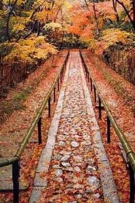 【野疯】10月24日蟒山国家森林公园+银杏林,老幼皆宜