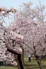 桃花盛开的地方 偶然的邂逅 美丽的相遇