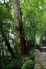 周六莫干山健康徒步