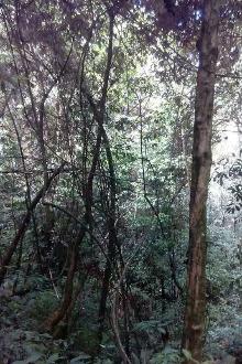 徒步穿越元阳原始森林