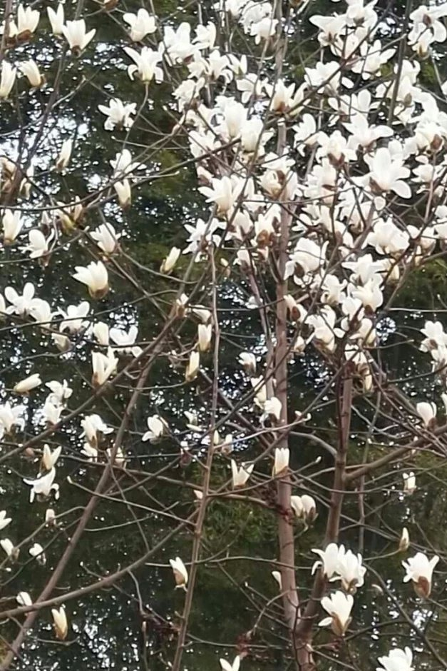 安庆巨石山桐城赏花民俗二日游(自驾,AA制)