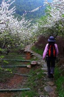 2月8日李花盛开,从化徒步踏春,野炊亲子乐