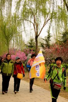胡服骑摄户外4月12日鹤壁樱花节,金沙滩,淇河湿地