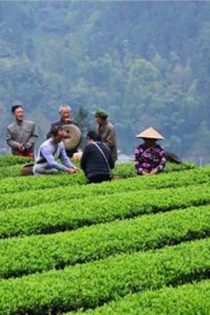 寻茶马古道品千年古茶活动