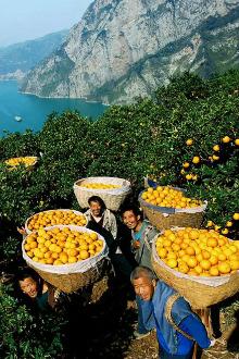 《周末去哪儿》之—脐橙熟了,我们去尝尝(二日自驾