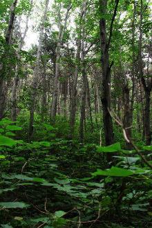 九门口穿越恋爱森林到长寿山