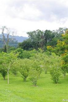 热带雨林园勐伦植物园
