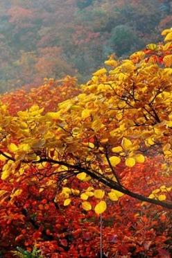 205年10月24日周六,约伴巩义长寿山放飞心情赏红叶!