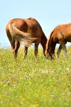 一路情歌向草原,扬鞭策马到天边