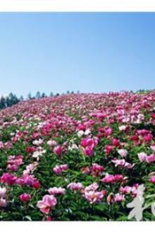 3月14日京山茶花源、空山洞一日游活动