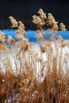北京小雅鲁藏布江-让子弹飞拍摄地白河踏冰一日游