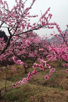 徒步赏桃花