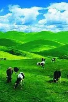 7月17到19日三天带您走进梦幻乌兰布统大草原