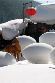 【冰雪世界】黑龙江哈尔滨雪乡之旅,约伴同行