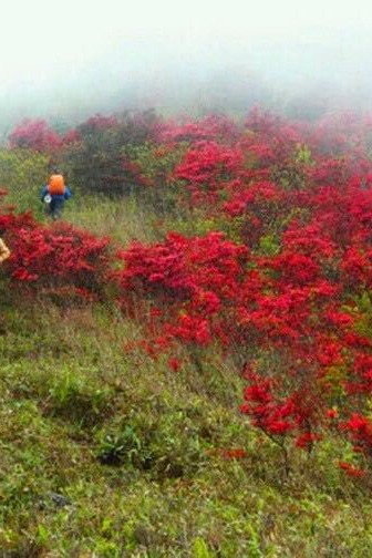 【特价活动】4月24日徒步登从化高峰-通天蜡烛山