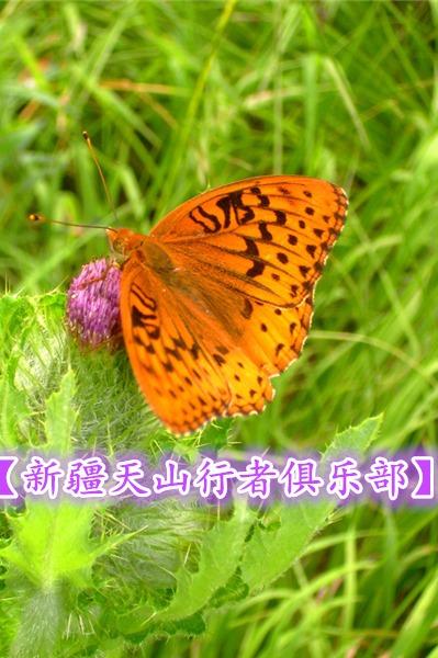【新疆天山行者俱乐部】9月4日蝴蝶谷一天穿越徒步