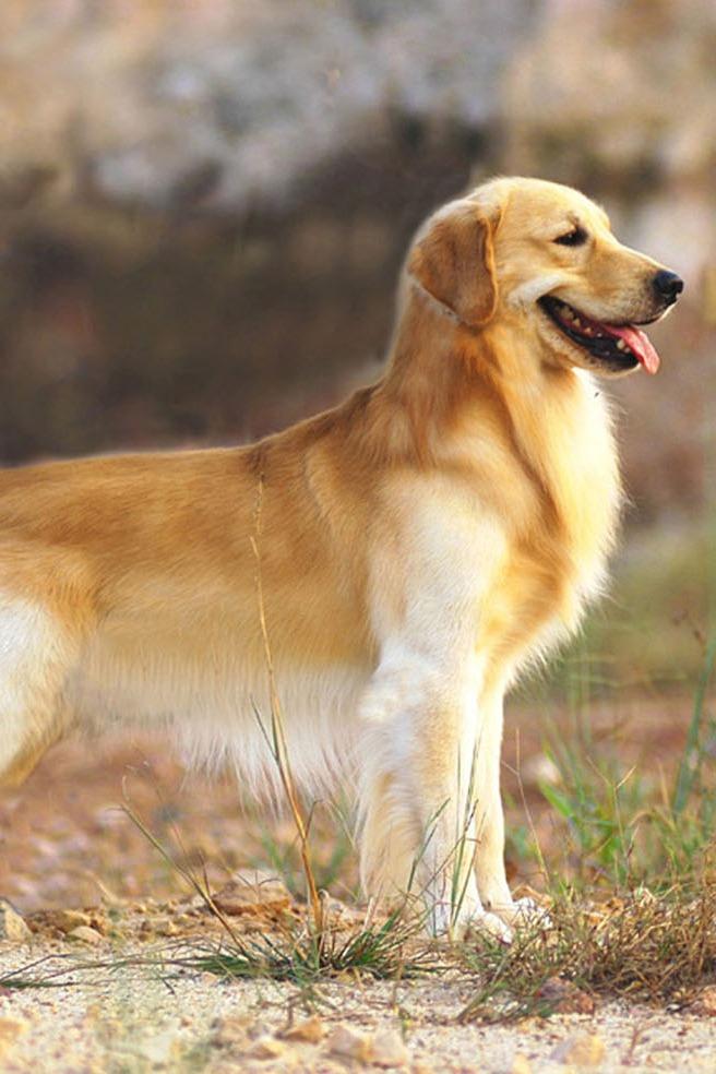 散步、遛狗活动组织中...