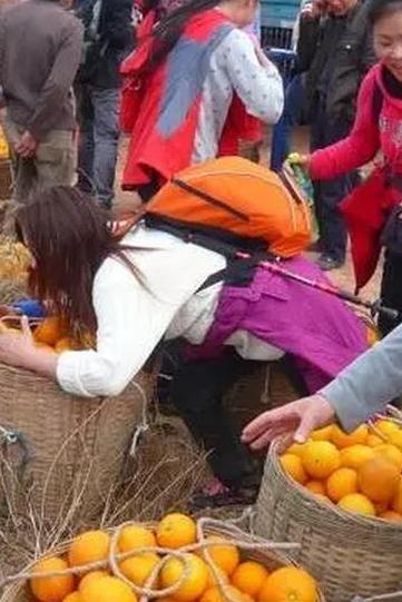 """""""捡""""脐橙+徒步健身,周末远离城市,贴近自然"""