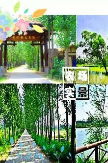 黄河稻夫赏三千亩油菜花,游三百亩涌泉湖一曰。