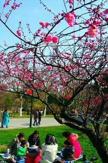 红梅傲雪迎春来—世纪摄影·赏梅游园会