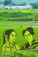 周六一起来看稻田画,免费报名