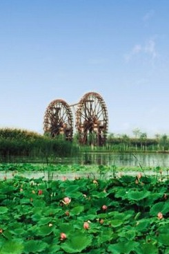 银川滨河薰衣草主题花园休闲赏花拍照、鸣翠湖游玩戏水