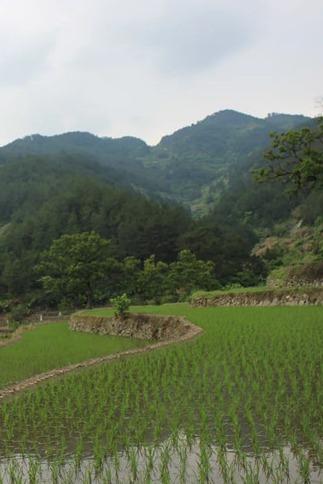 6月10日一起行走麻城仙姑峡(浅水溯溪,爬山)