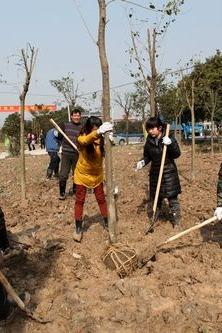 植树造林公益活动