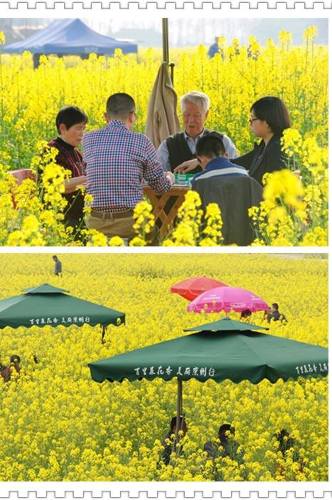 【油菜花一日游】80里重庆路油菜花,春回街子古镇
