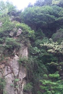 药乡国家森林公园一日游