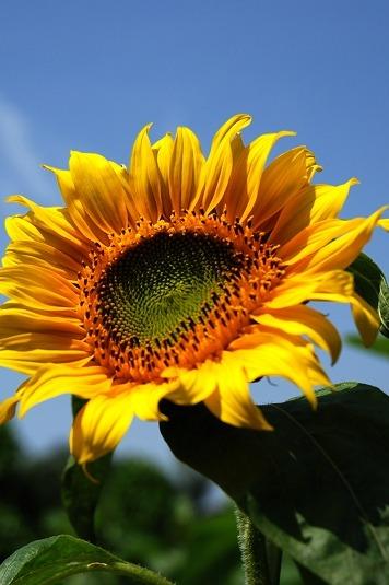 每周六日百万葵园赏花、看小松鼠、小白鸽休闲之旅