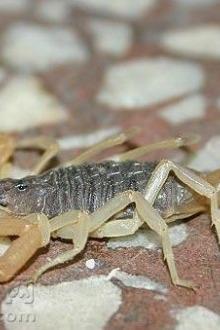 蝎子养殖交流