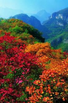 周六焦作5A云台山西区峰林峡赏红叶休闲一日游